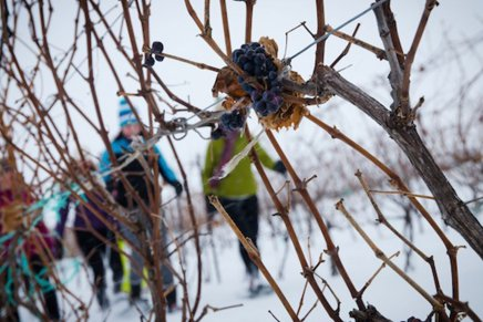 Snowshoe in thevineyards